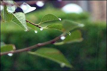 آغاز بارش پراکنده در غرب کشور/جمعه تا یکشنبه خلیجفارس مواج و متلاطم است/وزش باد شدید، گردوخاک و کاهش کیفیت هوا جمعه و شنبه در غرب و جنوبغرب
