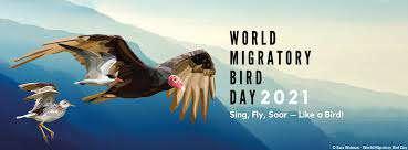آواز بخوان، پرواز کن، اوج بگیر - مثل پرنده؛ در روز جهانی پرندگان مهاجر