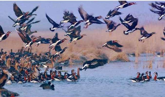 منطقه کشف رود رکوددار بیشترین تنوع گونه پرنده درخراسان رضوی
