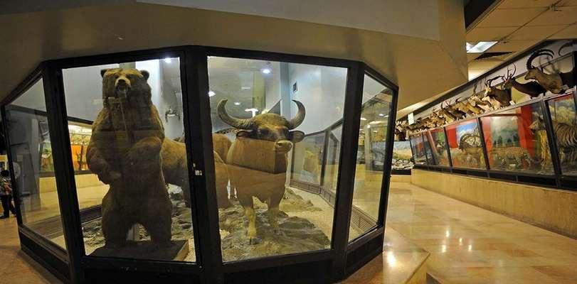 موزههای تاریخ طبیعی سکوی ارتقای فرهنگ تنوع زیستی