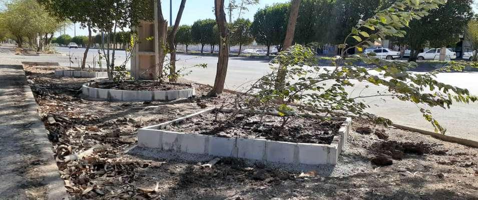"""کاشت نهال در ۳۰ باغچه احداثی در بلوار حضرت رسول اکرم """"ص"""" توسط شهرداری خرمشهر"""