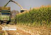 به اضطرار آبی رسیدهایم/ صادرات محصولات کشاورزی، صادرات آب است/ واردات دامهای اسپانیایی برای اصلاح ژنتیک دامهای ایرانی