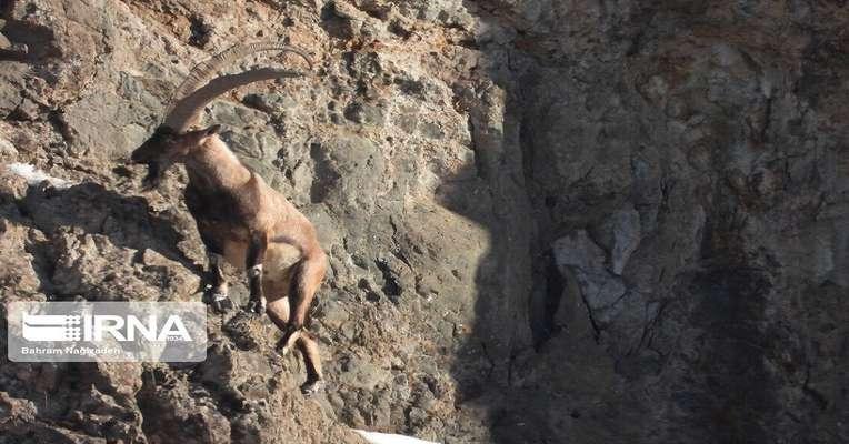 امکان دریافت کمکهای مردمی برای حفاظت از حیات وحش اصفهان فراهم شد