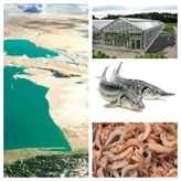 صدور مجوز استفاده از آب دریا بدون نمکزدایی برای طرحهای آبزی پروری و صنعت شورورزی استان گلستان