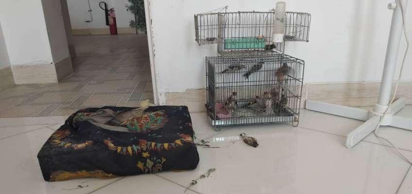 دستگیری متخلفین زنده گیری پرندگان وحشی در شهرستان سمیرم