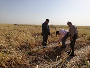 بازدید مدیر کل مدیریت بحران استان از مزارع کشت و صنعت نیشکر بازدید کردند