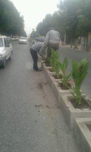 کاشت گل اختر و گل های زینتی در سطح شهر