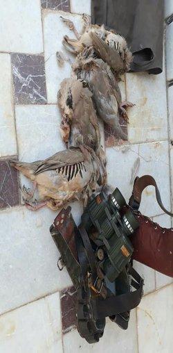 دستگیری یک متخلف شکار وصید در منطقه شکار ممنوع زرچشمه شهرضا