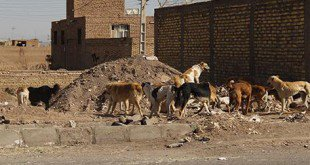 مقابله با پدیده ی زباله گردی و مبارزه با سگهای ولگرد، نیازمند همکاری شهروندان است