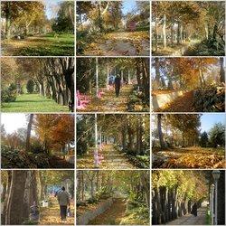  پابرجایی برگ های پاییزی پارکهای نجف آباد