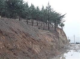 تصویر منتشر شده در فضای مجازی در خصوص قطع درختان آبیدر مربوط به هرس درختان بوده است / درختی در مسیر اجرای پروژه عمرانی فاز ۳ بلوار ۲۴ متری آبیدر قطع نشده است