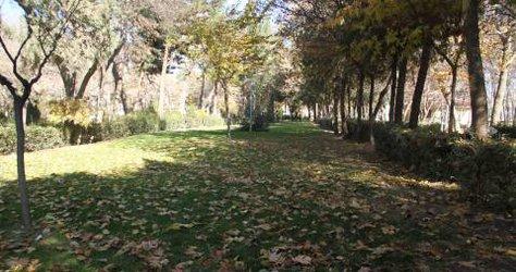 برگهای پاییزی میهمان پارک ملت شهر میشوند.