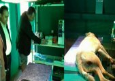 راه اندازی کلینیک عقیم سازی سگهای ولگرد طالقان