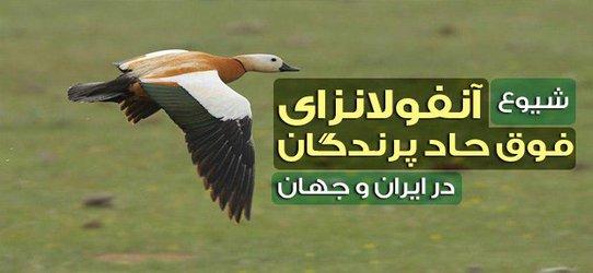 آخرین وضعیت بیماری آنفلوانزای فوق حاد در ایران و جهان