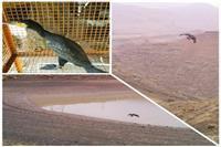 تیمار پرندگان وحشی توسط محیطبانان یگان حفاظت محیط زیست شهرستان تفرش