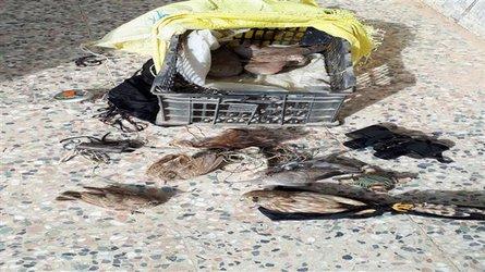 شناسایی و دستگیری یک باند زنده گیری پرندگان شکاری در دهلران