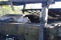 ۶ کوره ذغال سنتی در شهرستان صومعه سرا تخریب شد
