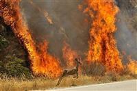 آتش سوزی در عرصه های محیط زیست سیر نزولی دارد