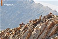 انتزاع معدن سرمک از منطقه حفاظت شده لشگردر ملایر