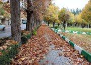 برگ های پاییزی، زیبایی بصری خاصی در سطح شهر و بوستان های شاهین شهر ایجاد می نماید