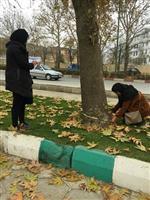 برداشت آمار و اطلاعات درختان معابر اصلی سطح شهر سنندج آغاز شد