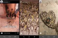 یک متخلف در چهارمحال و بختیاری با انتشار تصاویر شکار غیرمجاز در فضای مجازی محکوم شد