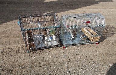 دستگیری ۳ صیاد و شکارچی متخلف در هرسین