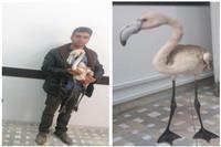 فلامینگوی بازمانده از مهاجرت در یزد